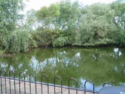 Cleveleys Duck Pond