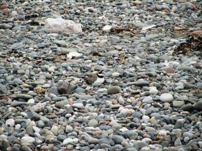 Baby birds raised on the beach
