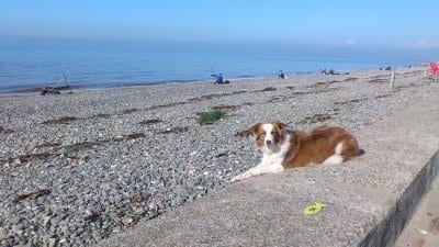 Ruby comes to visit Cleveleys