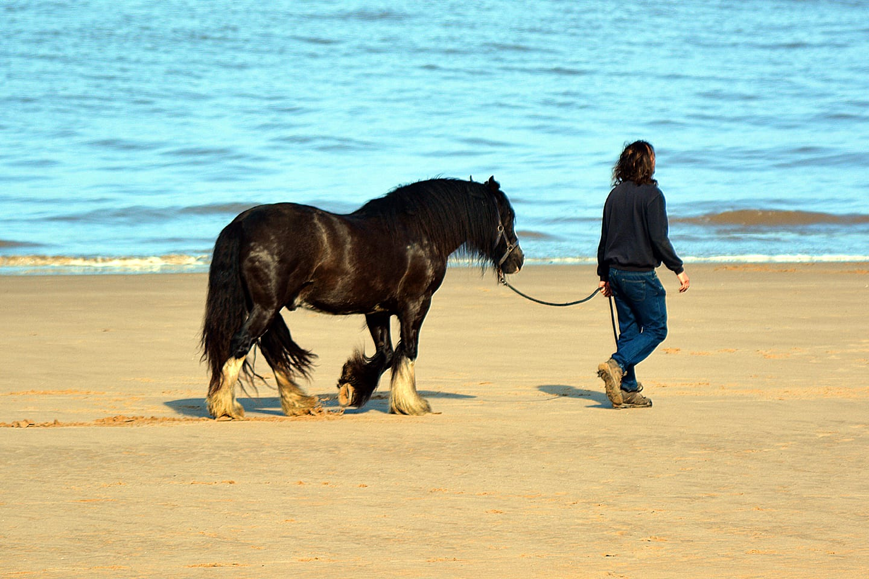 Horse on Cleveleys beach
