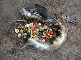 This is why we do community beach cleaning - this bird has starved to death with a stomach full of plastic