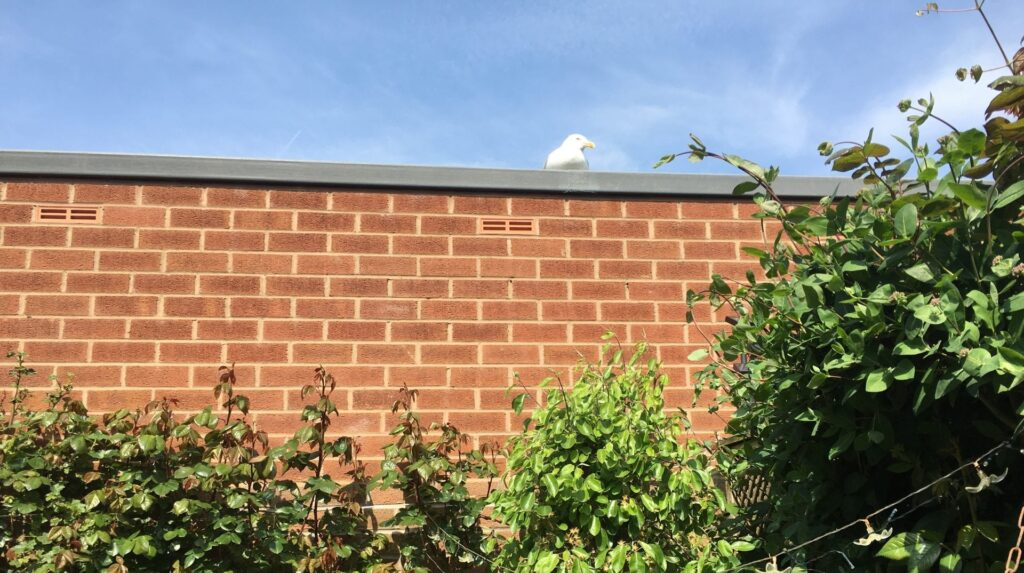 Our tame seagull doing a spot of sunbathing and keeping an eye on us...
