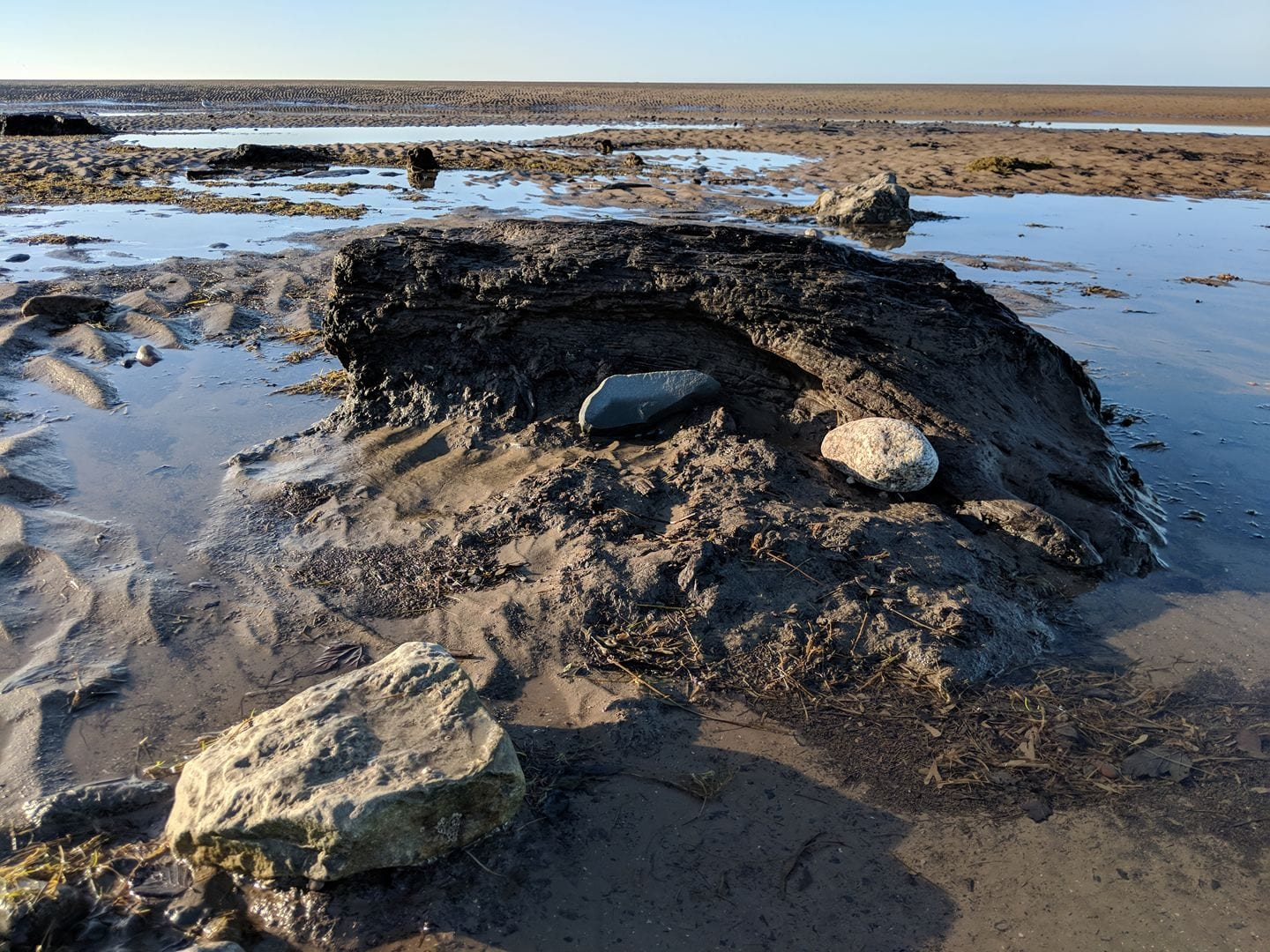 Tree stumps from the petrified forest on Cleveleys beach. Photo: Andy Blundell