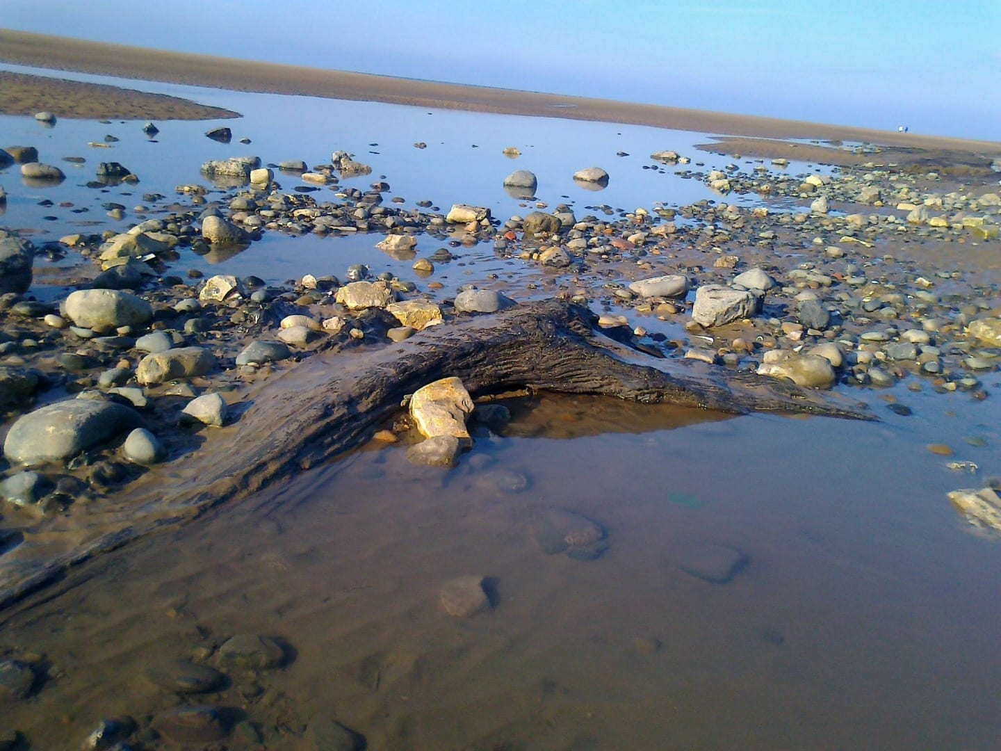 tree stumps from the petrified forest on Cleveleys beach, photo: Andy Ball