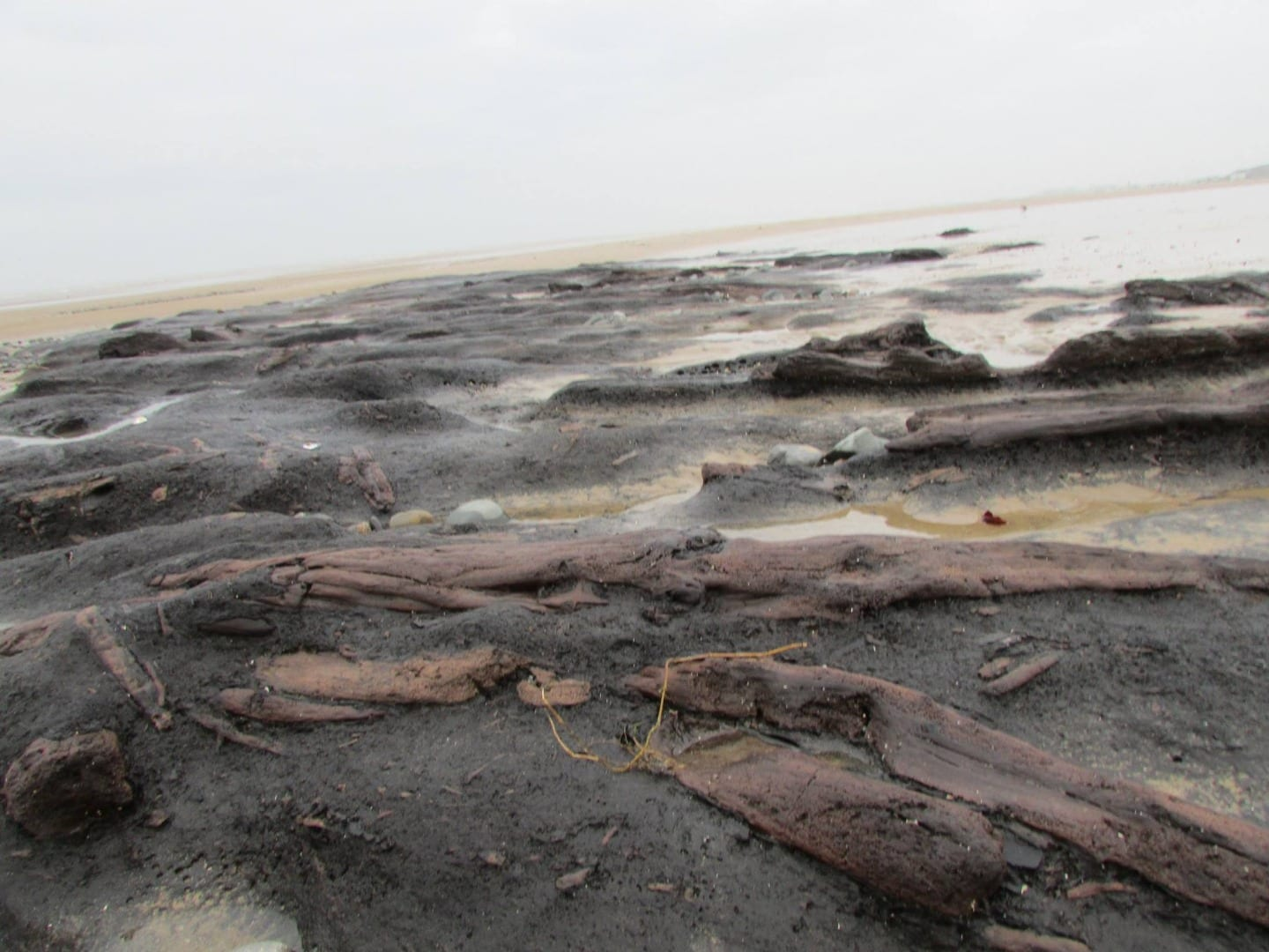 tree stumps from the petrified forest on Cleveleys beach, photo: Alison Wilkinson