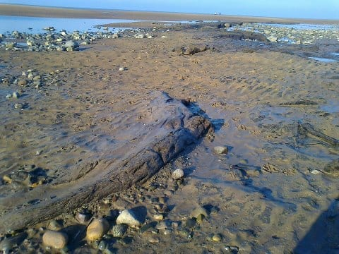 Petrified Forest on Cleveleys Beach